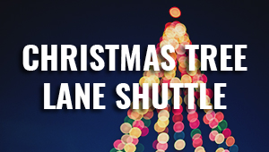 Christmas Tree Lane Image